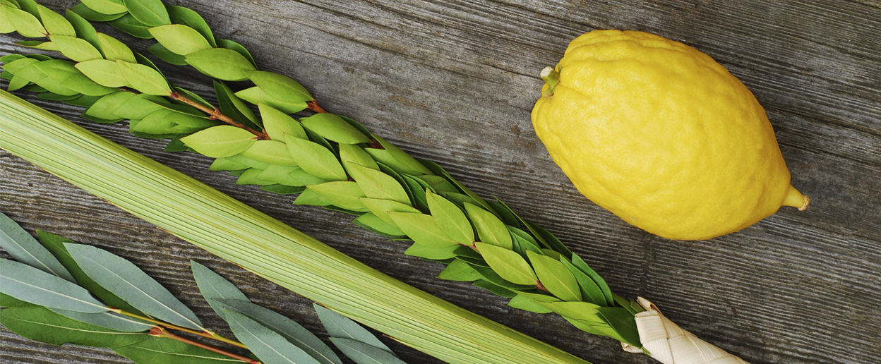 Lulav and Etrog for celebrating Sukkot